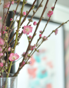 blossoming branches.jpg